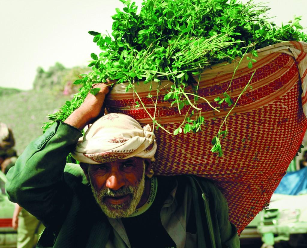 Qat Yemen Credit- flat.luxury .