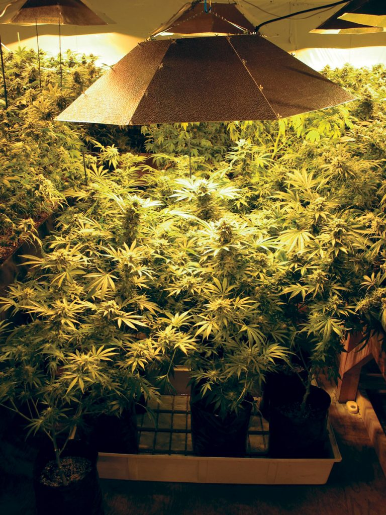 Cannabis puts pressure on another water resource: electricity, with indoor growers making huge energy demands on the grid © Bob Doran